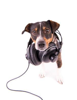 quelle musique pour relaxer son chien