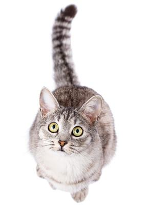 Comprendre le chat fugueur