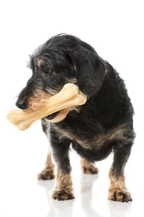 Donner des friandises à son chien