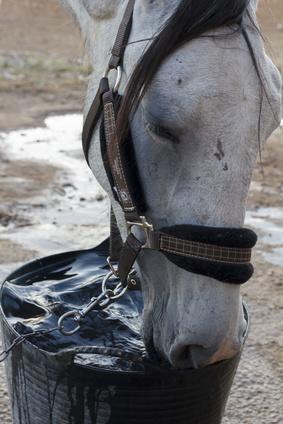 Eau pour cheval