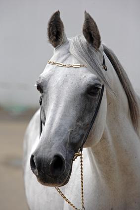 L'entretien quotidien de son cheval