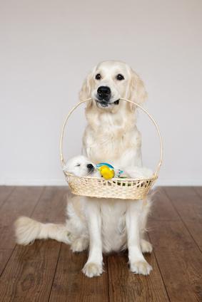 Naissance du chien