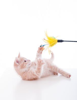 Offrir un jouet pour chat