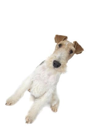 Prévention des troubles digestifs du chien