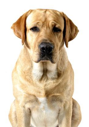 Protéger son chien contre la piroplasmose