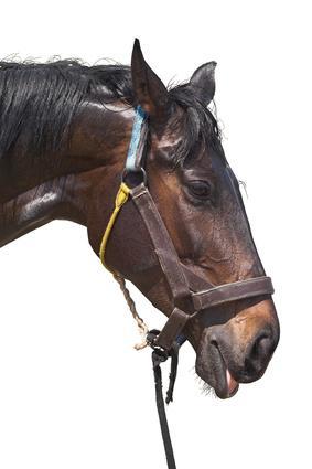 Soulager la diarhhée du cheval