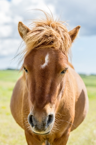 symptômes de la gale de boue chez le cheval