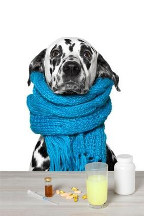 Quand utiliser des anti-inflammatoires pour chien