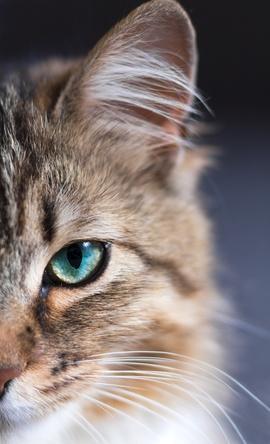vision du chat