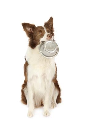 pourquoi choisir des croquettes pour chien sans céréales