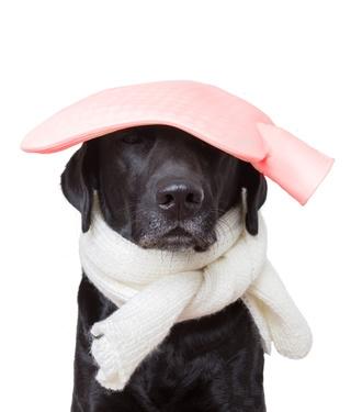 donner du doliprane à un chien