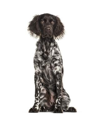 problèmes liés à la ménopause du chien