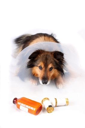 pourquoi donner des probiotiques à son chien