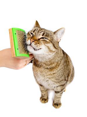 Entretenir le pelage de son chat
